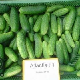 Атлантис F1