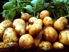 Вебинар «Картофель. Акцент на качество»