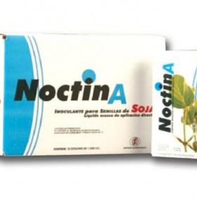 Ноктин А
