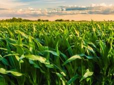 Семинар «Современные технологии в производстве кукурузы на зерно» в Приморском крае