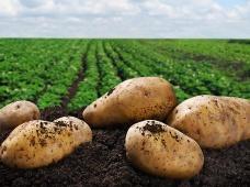 Научно-практический семинар: «Особенности технологии выращивания картофеля на инновационной основе»