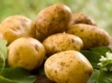 Перенос семинара «Особенности технологии выращивания картофеля на инновационной основе»