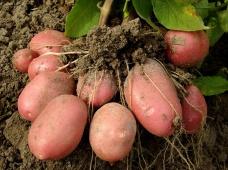 ОРВЕГО® - Максимальный потенциал здорового урожая!