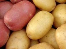 Рекомендации по системе защиты картофеля от болезней