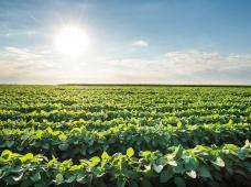 Демонстрационный показ опытов по применению средств защиты растений в посевах сои и кукурузы в Амурской области