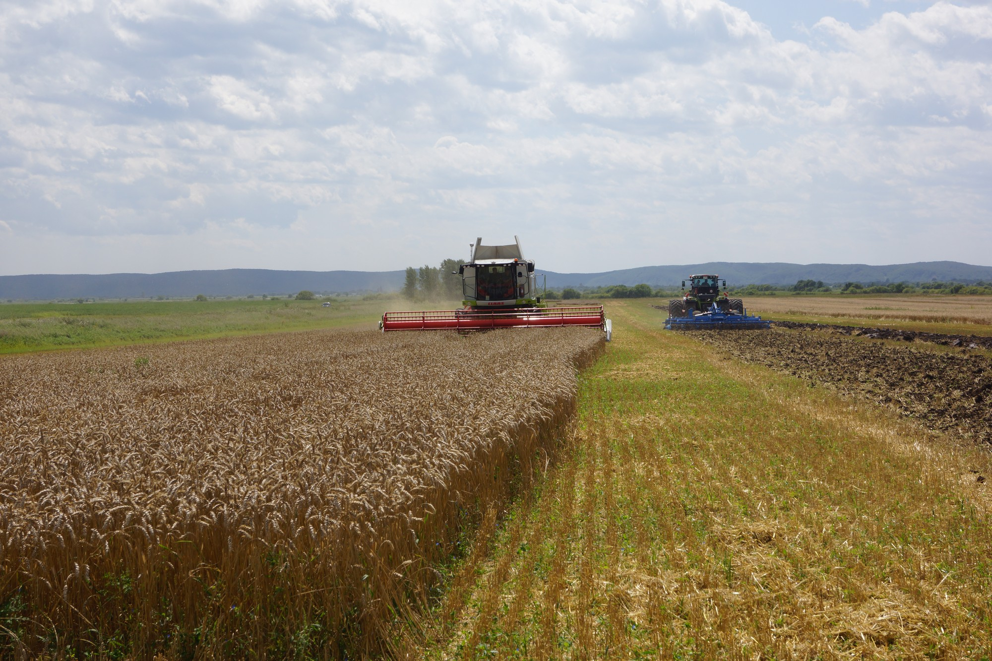 Выращивание зерновых культур ооо 257