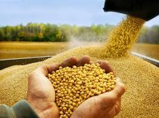 Выездной семинар: «Новые элементы технологии возделывания сои и кукурузы в условиях Приморского края»