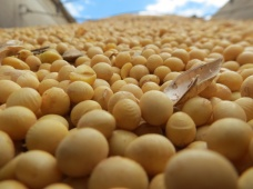 Учебный семинар «Инновационные решения защиты сои и кукурузы в условиях Амурской области»